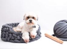 Bungee - Hunde/katte kurv