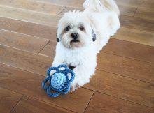 Blomst - Hundelegetøj